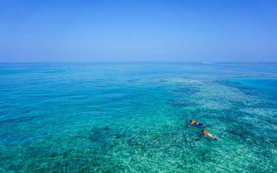 Top 5 : Les meilleurs spots de plongée de la Martinique