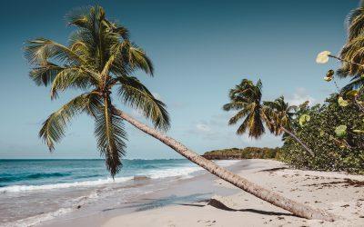 Climat : la Martinique et ses conditions météorologiques