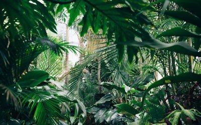Les 6 bienfaits de la nature sur nous