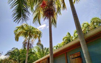Location bungalow Martinique