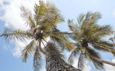 Séjour à la Martinique : 4 jours, 7 jours et 10 jours.